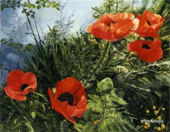 richard-catherine-champ-de-coquelicots.jpg